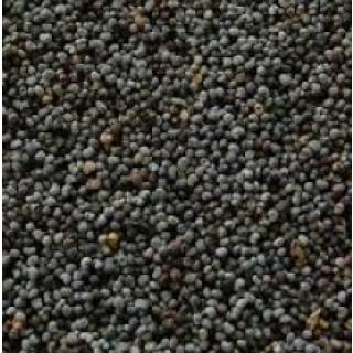 sementes papoila
