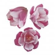 magnolia obreia