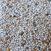 sementes chia branca
