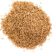 sementes sesamo dourado